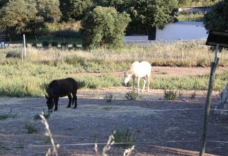 animales rescatados Lobopark