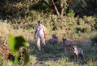 Daniel en la manada