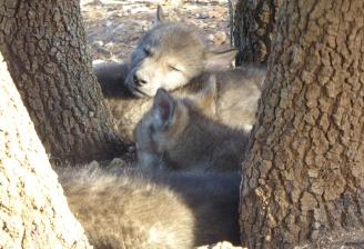 La siesta es sagrada